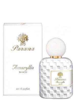 Amaryllis Bianco Panama 1924 für Frauen