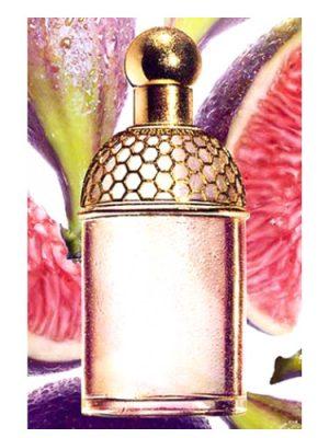 Aqua Allegoria Figue - Iris Guerlain für Frauen