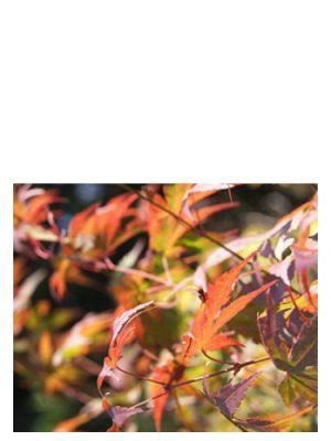 Autumn Bud Parfums für Frauen