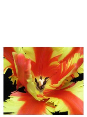 Jezebel Bud Parfums für Frauen