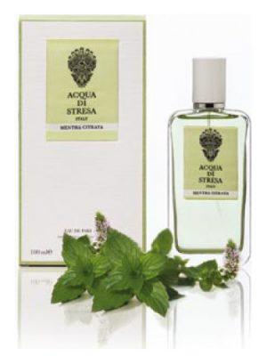 Mentha Citrata Acqua di Stresa für Frauen und Männer