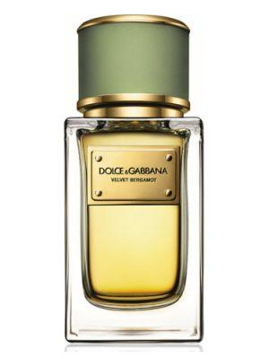 Velvet Bergamot Dolce&Gabbana für Männer