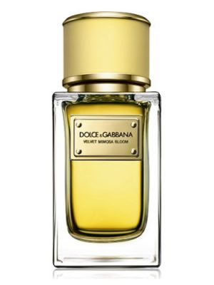 Velvet Mimosa Bloom Dolce&Gabbana für Frauen